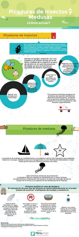 Infografía medusas